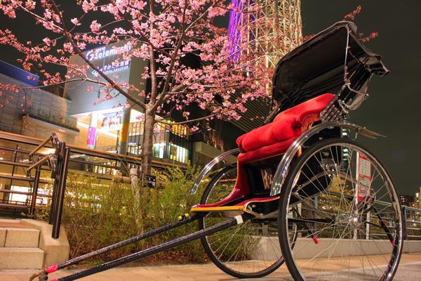 東京スカイツリー×河津桜×人力車