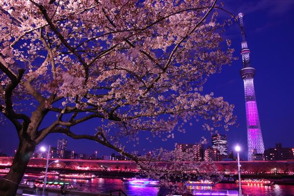 隅田公園の夜桜・夜景スポット情報
