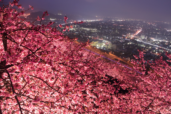 松田山ハーブガーデンの夜景スポット情報(まつだ桜まつり)