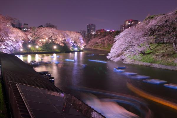 千鳥ヶ淵公園の夜桜スポット情報✿