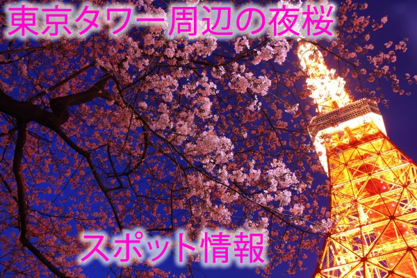 東京タワー周辺の夜桜スポット情報✿