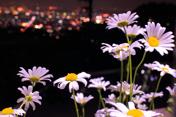 太平山神社の夜景スポット情報