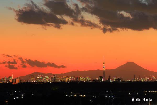 鎌ヶ谷市役所屋上の夜景スポット情報